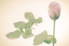 Rose Flower image libre de droits