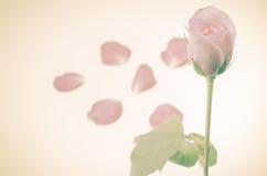 Rose Flower images stock