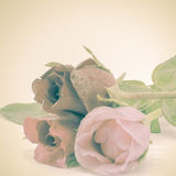 Rose Flower images stock