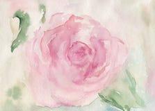 Rose Flower Fotografia de Stock