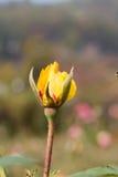 Rose Flower Images libres de droits