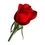 Rose Flower libre illustration