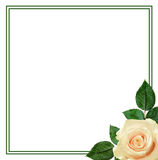Rose flower arrangement Royalty Free Stock Photos