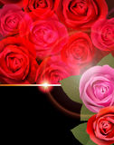 Rose Flower Background. Imagens de Stock