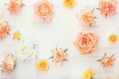 Rose flower background stock photos