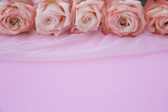 Rose, flower, background, romance Royalty Free Stock Photos