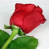 Rose flower on birthday, Valentine's or mother's day Royalty Free Stock Photography