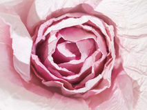 Rose Flower Bloom Paper Craft Love concept Royalty Free Stock Photo
