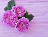 Rose flower blossom natural summer frame background table greeting. Rose flower blossom on pink wooden background holiday frame natural royalty free stock photo