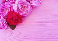 Rose flower blossom on pink wooden background table greeting. Rose flower blossom on pink wooden background holiday greeting table royalty free stock photos