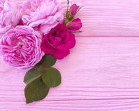 Rose flower blossom summer frame pink background table greeting. Rose flower blossom on pink wooden background holiday summer frame stock photos