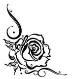 Rose, flower, border. Black roses, leaves and flower, border Stock Images