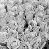 Rose flower bouquet, black and white color Royalty Free Stock Image
