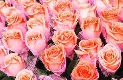 Rose flower bouquette Stock Image