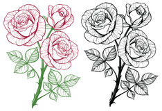 Rose flower branch set. Royalty Free Stock Image
