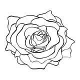 Rose Flower Bud nos esboços Única flor de florescência de Rose Head Contorno isolado vetor tirado mão Rose Illustration ilustração stock