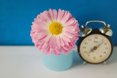 Rose flower with clock. Isolated on the blue background Royalty Free Stock Photography