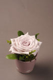 Rose flower decoration Stock Photography