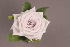 Rose flower decoration Stock Images