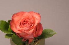 Rose flower decoration Stock Photo