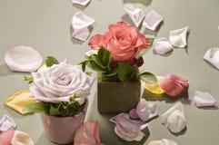 Rose flower decoration Royalty Free Stock Photo