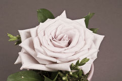 Rose flower decoration Royalty Free Stock Image