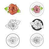 Rose Flower Different Logo Design Set Royalty Free Stock Photo