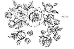 Free Rose Flower Drawing And Sketch. Royalty Free Stock Photo - 101722325