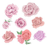 Rose flower element. Illustration, art Stock Images