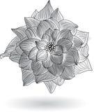Rose Flower Elements per progettazione Fotografia Stock