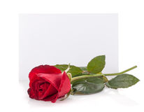Rose flower and empty card Royalty Free Stock Photos
