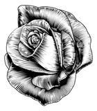 Rose Flower in Engraved Etching Woodcut Style Stock Photos