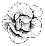 Rose Flower Engraved Vintage Woodcut Etching. A single rose woodcut flower in a vintage retro engraved etching style Stock Images