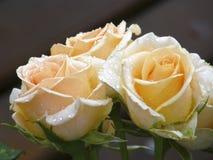 Rose Flower Fleurs Photographie stock libre de droits