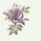Rose flower foliage Royalty Free Stock Images