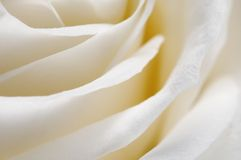Rose flower fragment Royalty Free Stock Photo