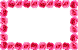 Rose flower frame background Stock Photos