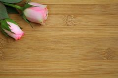 Rose flower with green foliage resting on a light wooden table. A rose flower with green foliage resting on a light wooden table Royalty Free Stock Photo