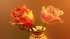 Rose flower for happy Valentine's day and wonderful day. Rose flower for happy Valentine's day ,goodtime Stock Image