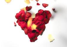 Rose flower heart shape frame Stock Image