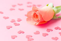Rose flower and hearts Royalty Free Stock Images