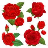 Rose Flower Icon Set realistica Immagine Stock