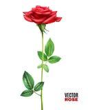 Rose Flower Illustration Royalty Free Stock Photo