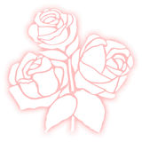 Rose flower illustration. Stock Photos
