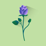 Rose Flower Isolated bleue Photographie stock