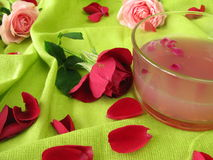 Rose flower jelly Stock Photography