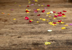 Rose flower leafs floor Royalty Free Stock Images