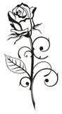 Rose, flower, love. Beautiful black rose, vector design element Royalty Free Stock Images