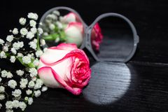 Rose flower lying near the open mirror and reflected in it. royalty free stock images