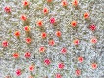 Rose Flower met witte achtergrond royalty-vrije stock fotografie